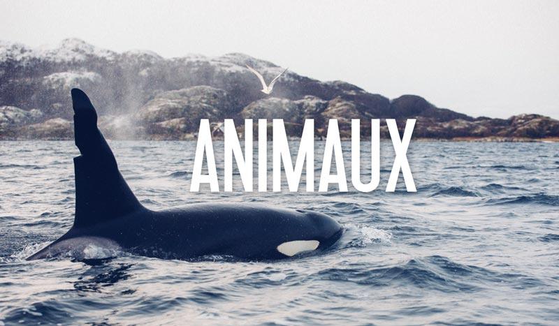 blog nature animaux