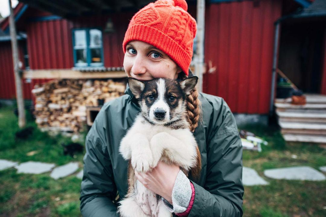 ou voir des bébés huskies en norvege