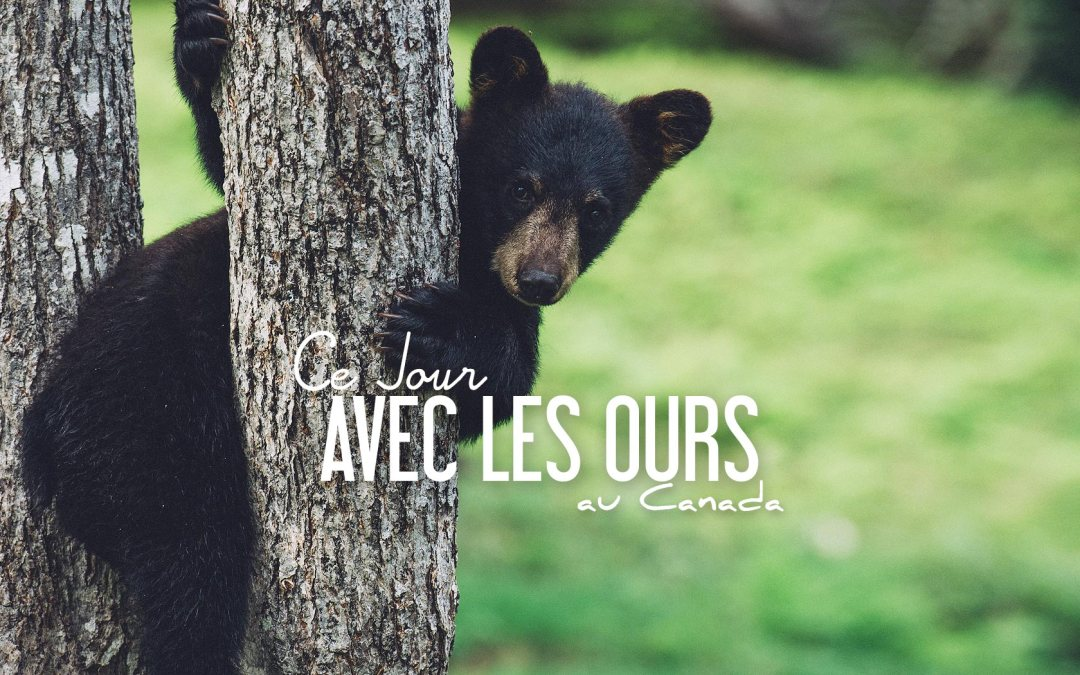 Rencontre ours canada