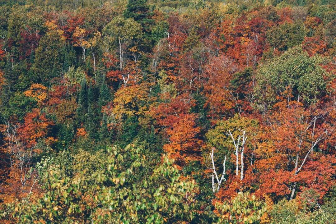 automne au canada ontario