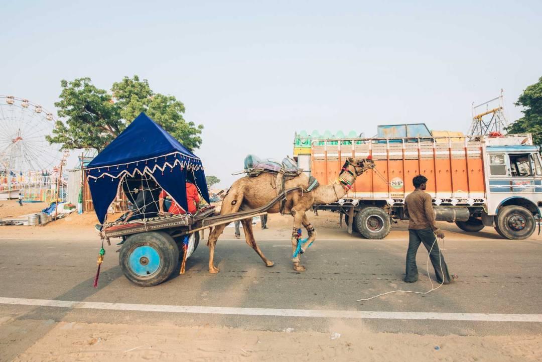 foire du chameau pushkar inde