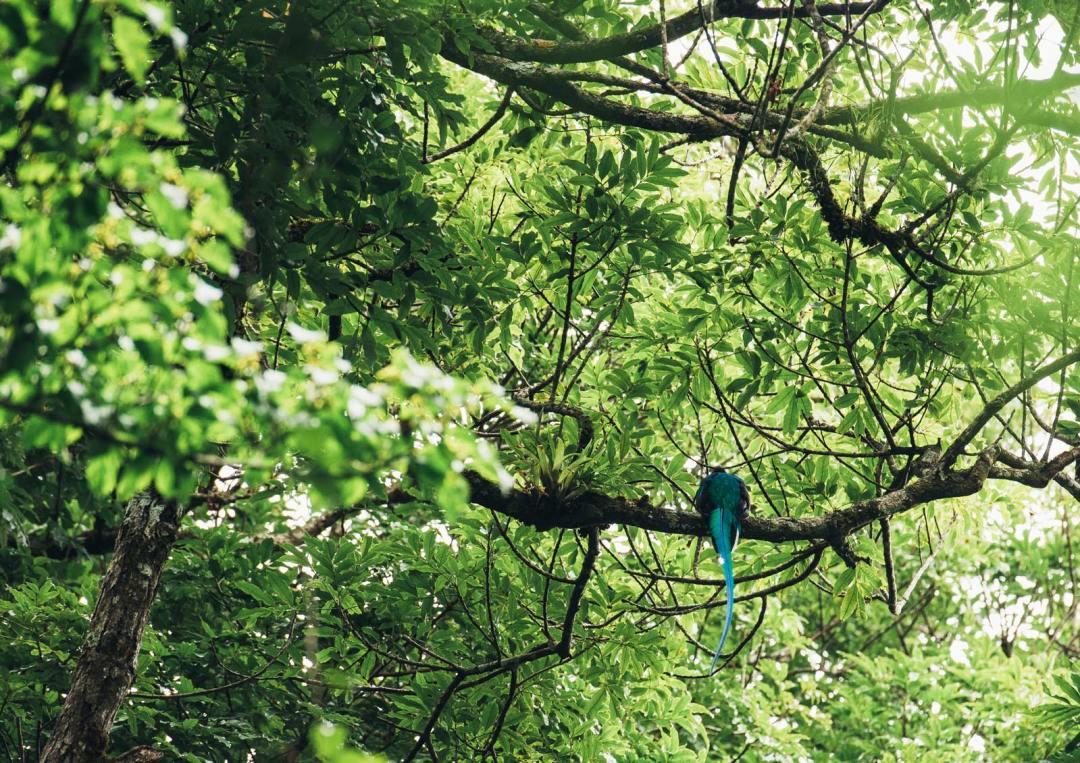 ou voir le quetzal au costa rica