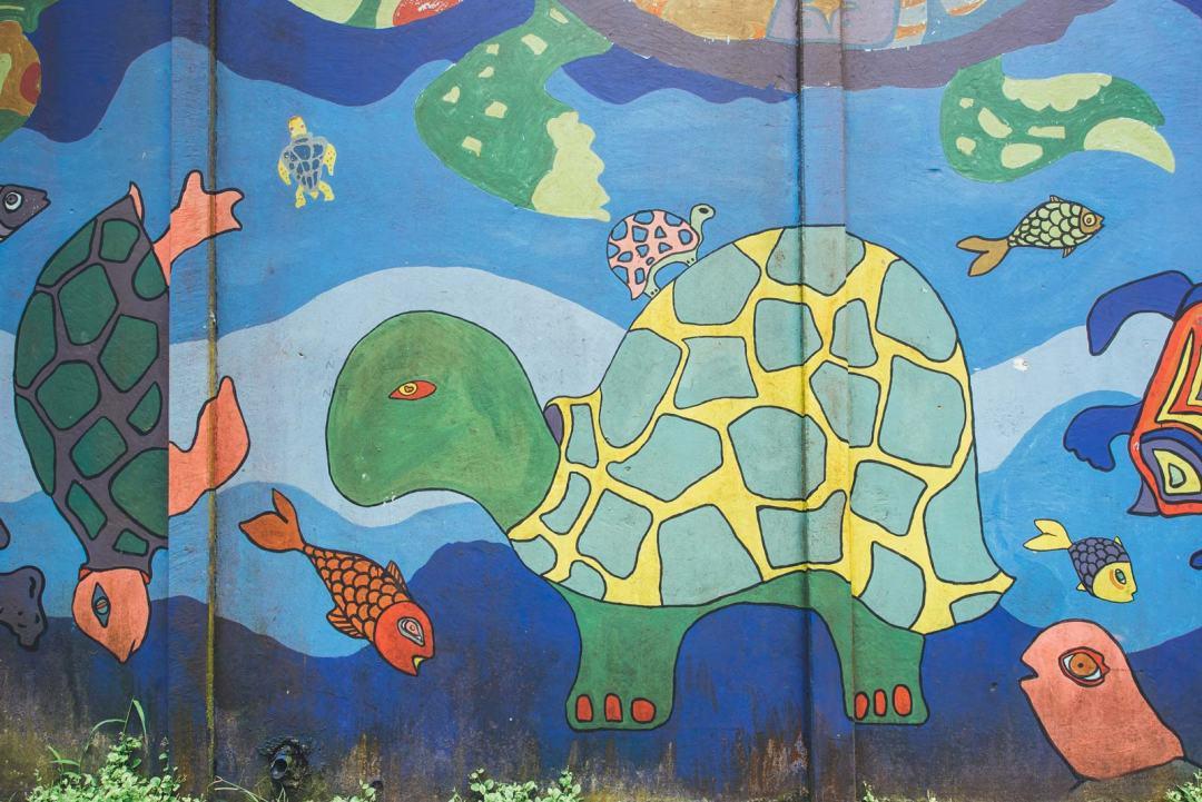 voir les tortues au costa rica tortuguero