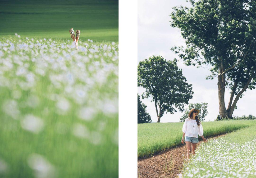 Voir des champs de lin en Normandie