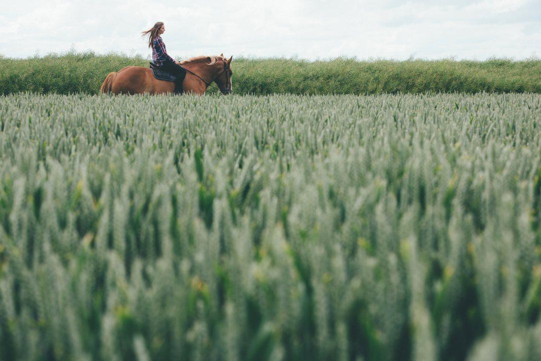 Faire du Cheval en Normandie à la ferme Beaulieu