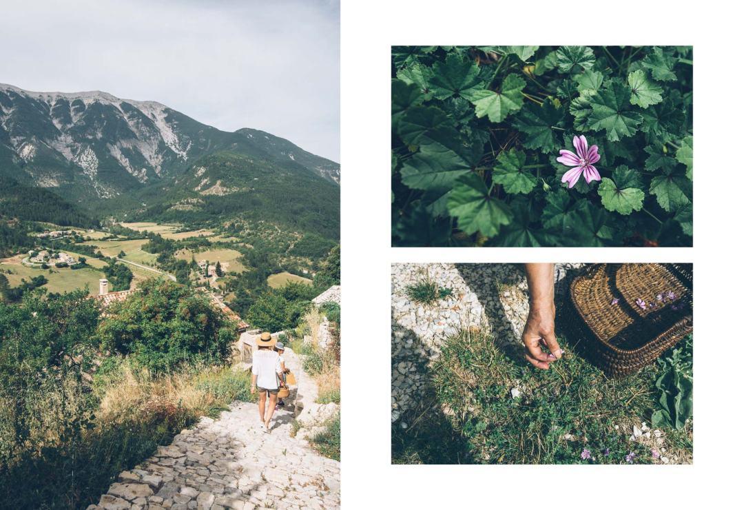 Brantes, cueillette de fleurs sauvages
