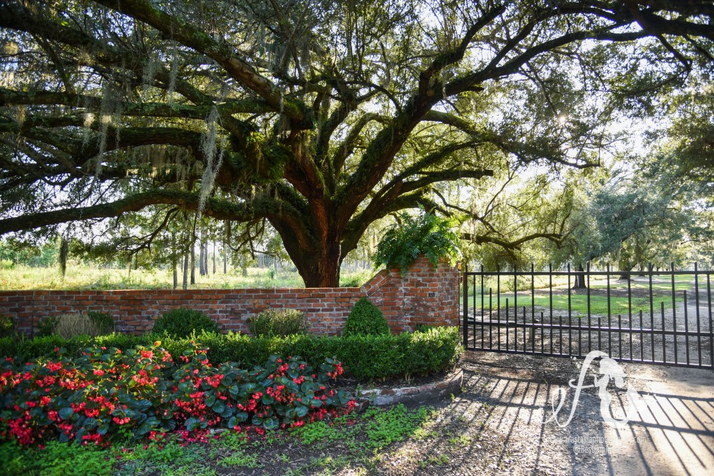 history by the acre on a southern plantation