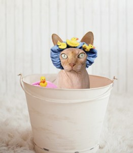 Cat in bath