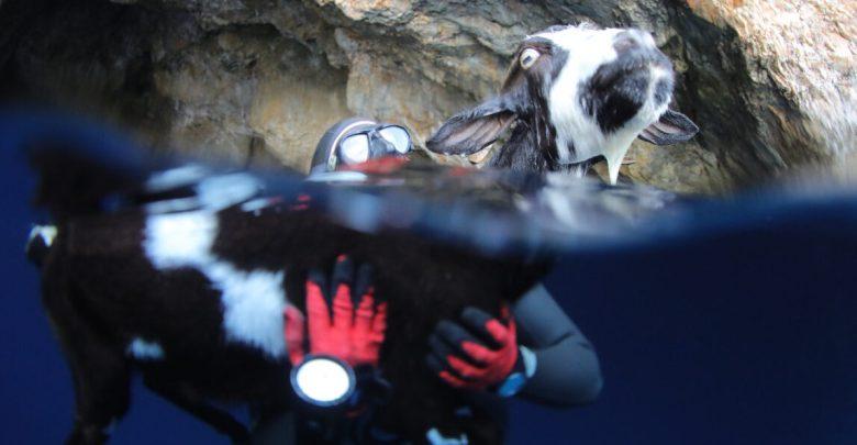 Απίστευτο: Ιπτάμενη κατσίκα προσγειώθηκε στην αγκαλιά της On a single breath!