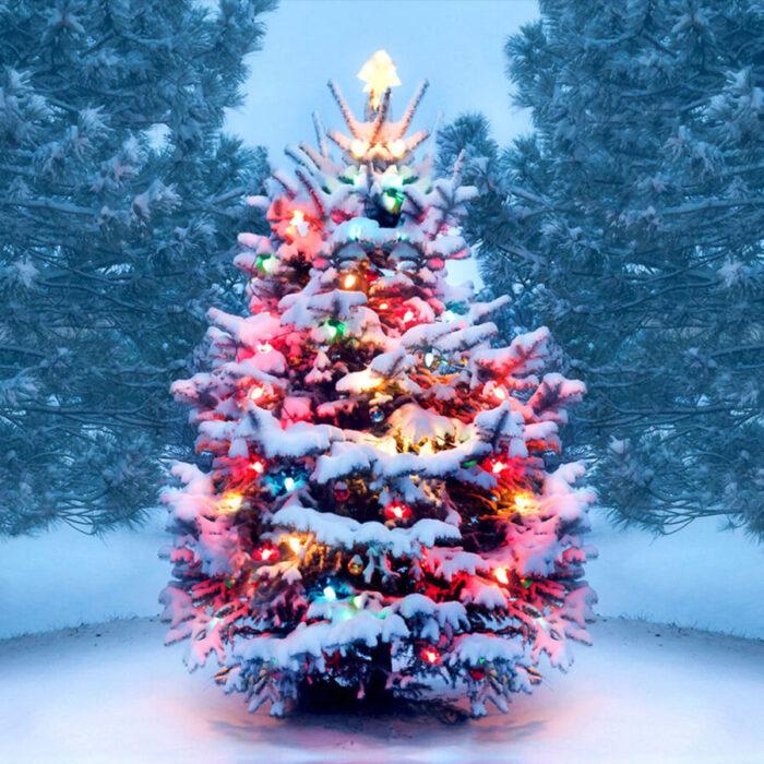Τι συμβολίζει το χριστουγεννιάτικο δέντρο (έλατο)