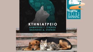 Αγία Βαρβάρα: Ο κτηνίατρος Δημήτρης Στάικος φροντίζει τα αδέσποτα ζώα