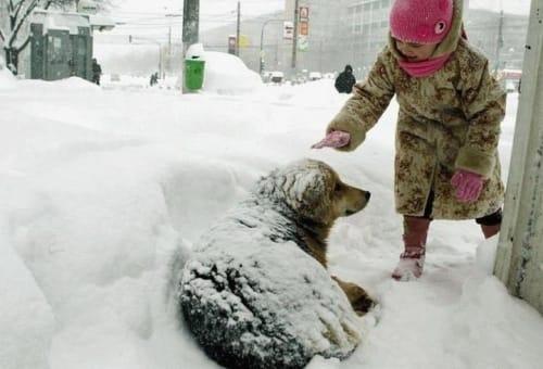 Βοηθάμε τους αδέσποτους φίλους μας να αντέξουν στο κρύο