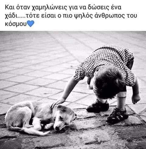 σκύλοι ζώα κατοικίδια