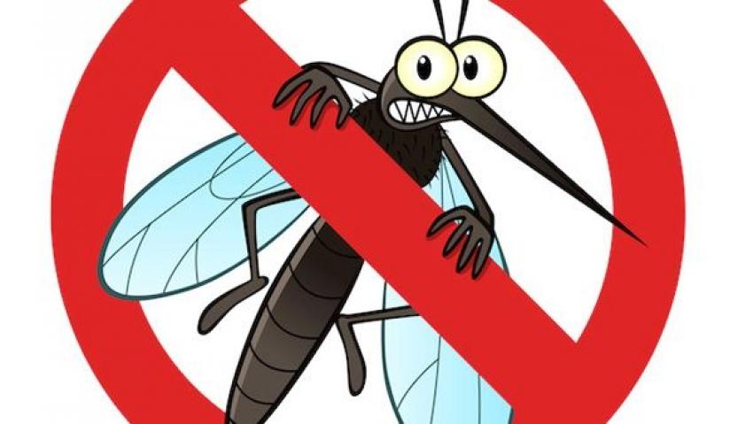 κουνούπια σπίτι