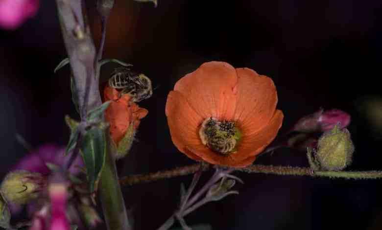 μέλισσες ύπνος