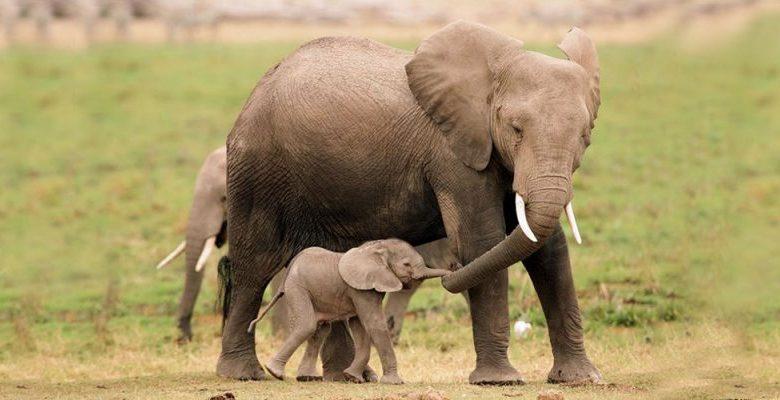 τυφλός ελέφαντας