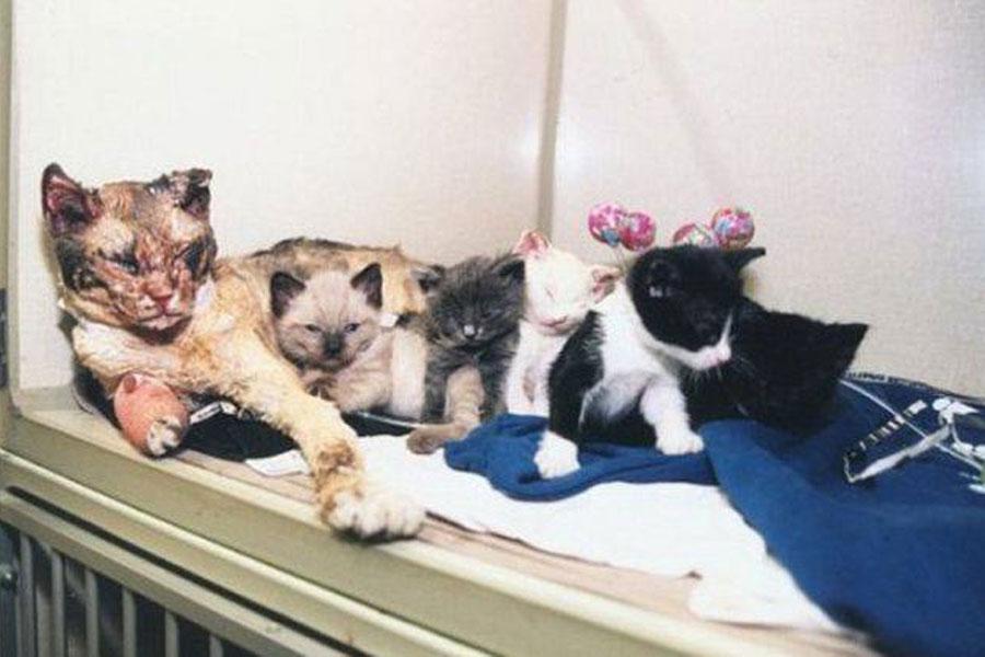 Ηρωίδα γάτα ορμάει 5 φορές σε φλεγόμενο κτίριο για να σώσει τα μικρά της