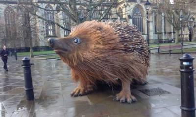 Giant hedgehog bristol