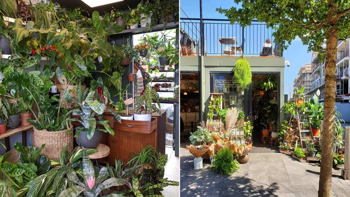 bristol plant shops