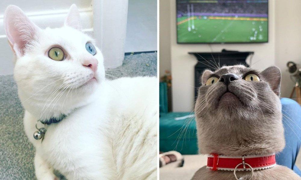 bristol cats