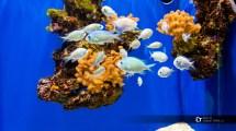Monaco. Oceanographic Museum
