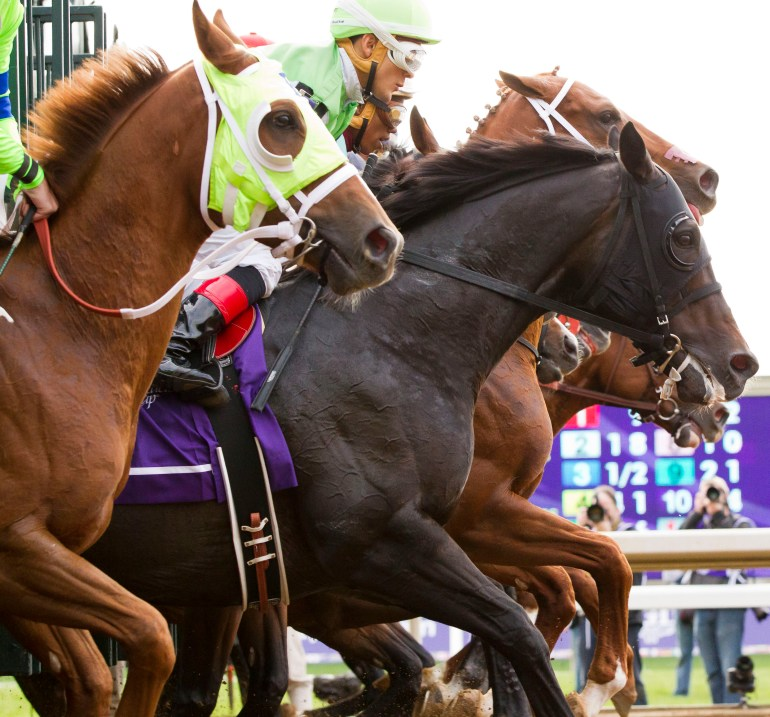 The horses break from the gate in the Las Vegas Breeders' Cup Dirt Mile Friday. Liam's Map, ridden by Jockey Javier Castellano, won the Las Vegas Breeders' Cup Dirt Mile Friday afternoon October 30, 2015, at the Keeneland Race Track in Lexington, KY during the first day of the 2015 Breeders' Cup. Liam's Map was trained by James Crupi of New Castle Farm in Marion County. (Doug Engle/Ocala Star-Banner)2015.