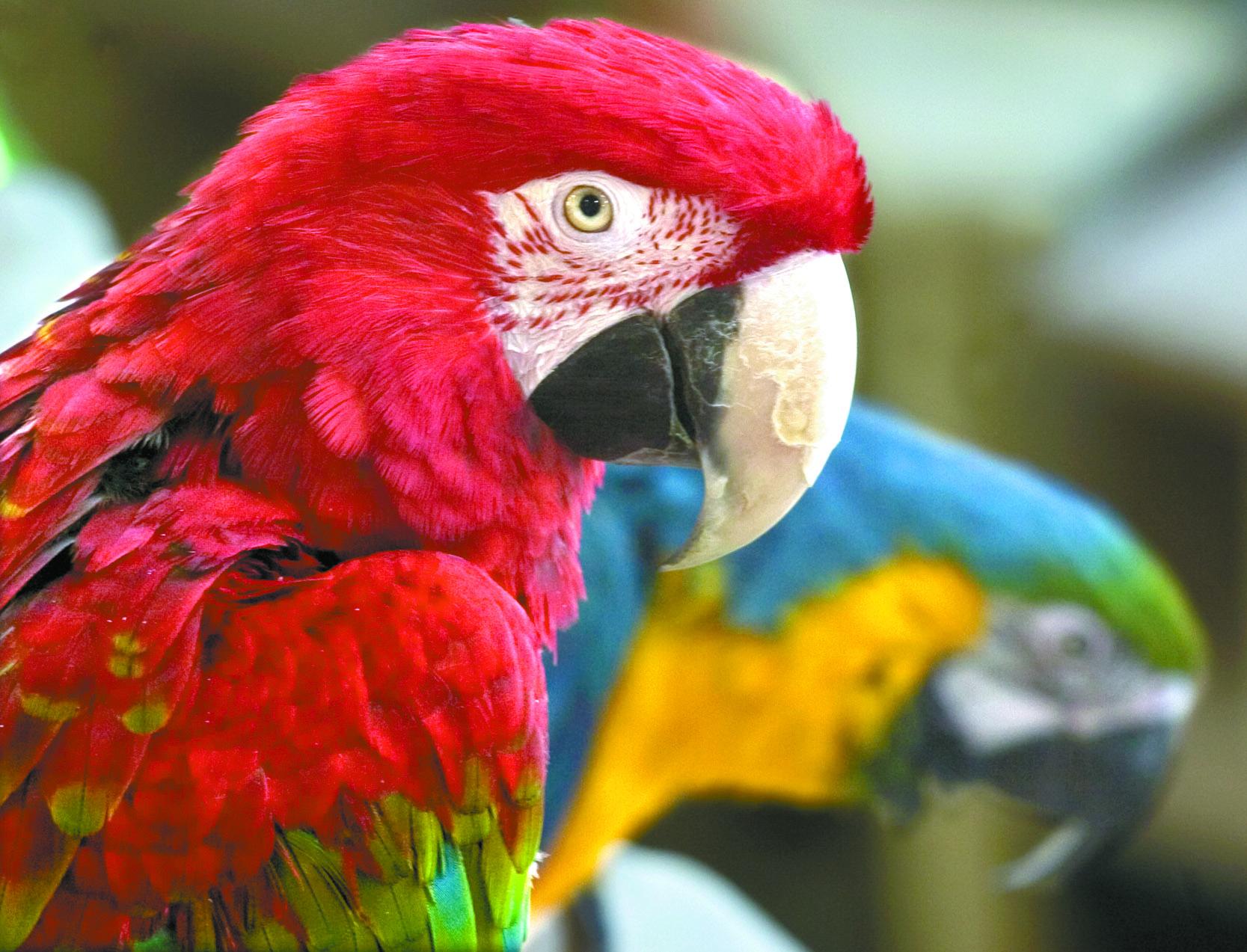 TRIP TO PUEBLO|PET PARADISE PET SHOP PUEBLO …