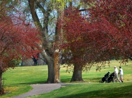 Golfers enjoy the weather at Gold Winner, Elmwood GC. (Courtesy photo)