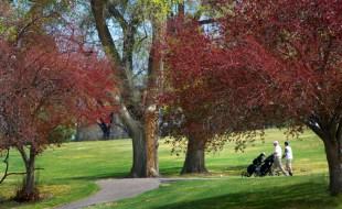 Golfers enjoy the weather at Gold Winner, Elmwood GC. (Courtesy photo)