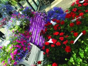Best Florist & Nursery honors go to Pueblo favorite, Campbell's Flowers & Nursery.