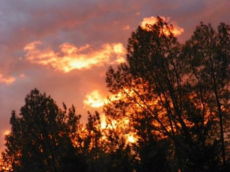 Sunset Tree On Fire