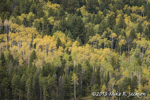Mountain Of Aspens Sept 26
