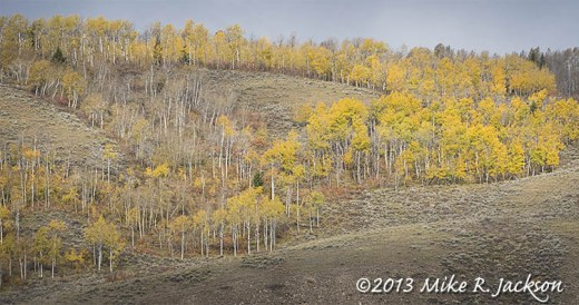 Aspen Hillside Oct 5
