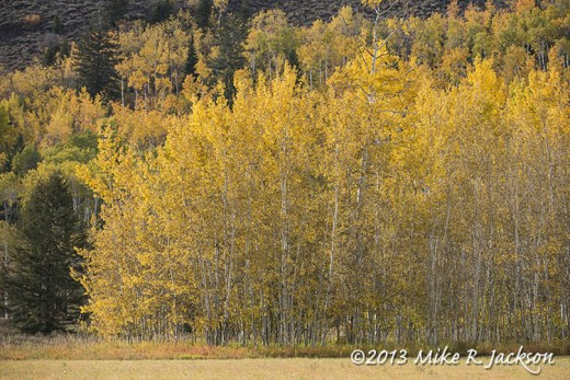 Teton Pass Aspens Oct 3
