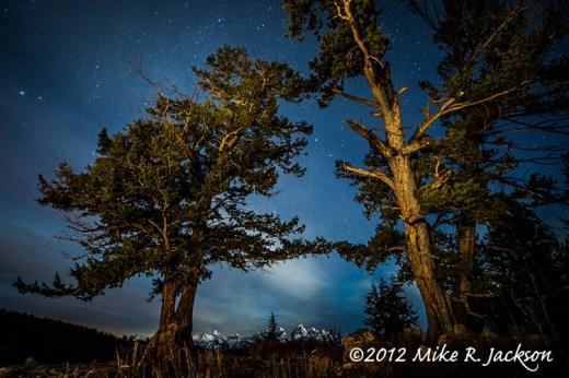 Wedding Trees and Stars