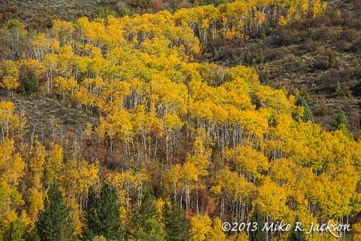 Aspen Bands October 2