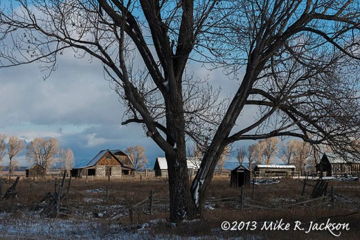 Cottonwood Homestead Nov1