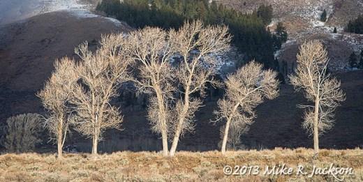 Cottonwoods Nov2