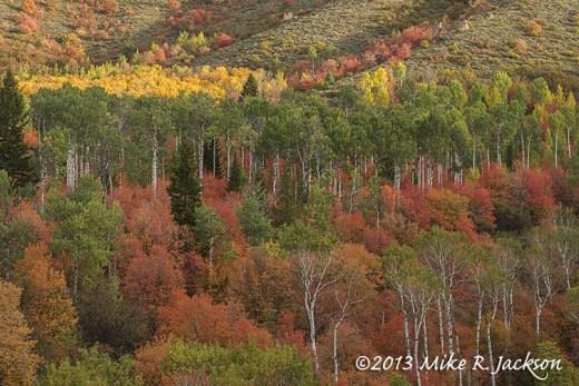 Mountain Mosaic October 2