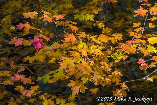 One Red Leaf October 2