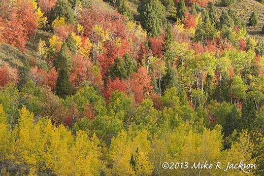 Trees Variety October 2