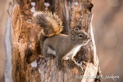 Web Afternoon Squirrel Nov5