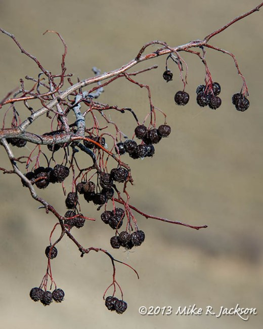 Web Berries Nov12