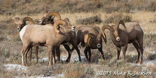 Web Bighorn Group Nov21