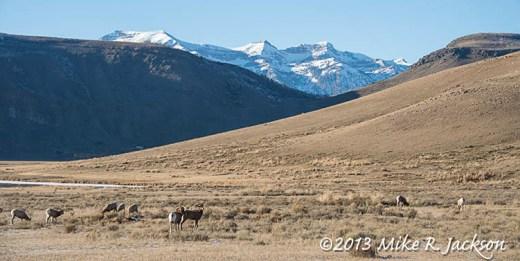 Web Bighorn Range Nov23