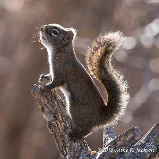 Web Squirrel Nov23