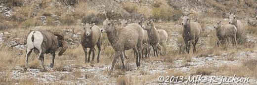 Web Parade Of Ewes Dec1