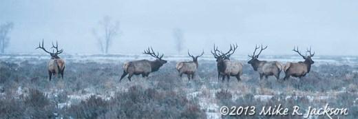 Web Pre-Dawn Elk Dec7