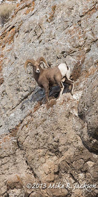 Web Ram on Cliffs Dec5