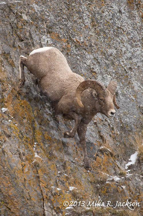 Ram Descent Dec1